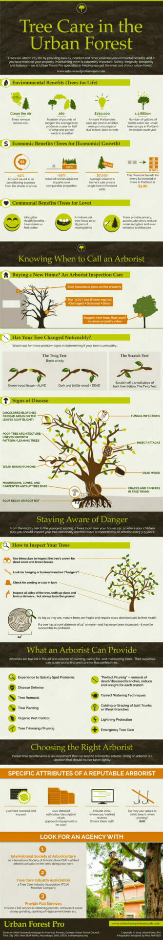 Tree care in the Urban Forest infographic and certified arborist