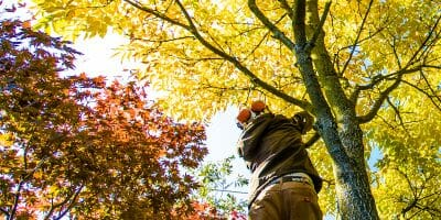 Fall tree care inspection
