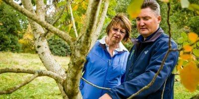 Arborist Tree Inspection