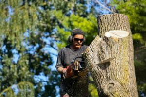 Arborist performing tree removal in Beaverton