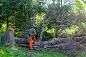 Beaverton, OR tree removal cleanup