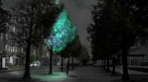 Bioluminescent Tree