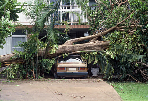 tree laying on house and car after storm requiring emergency tree removal - portland, beaverton, tigard OR