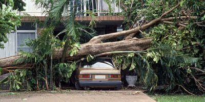 tree laying on house and car after storm