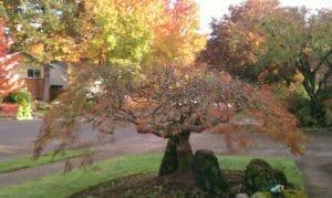 Oregon trees in fall