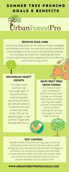 Summer pruning benefits Urban Forest Pro