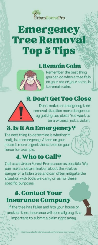 Emergency Tree Service Tips Urban Forest Pro