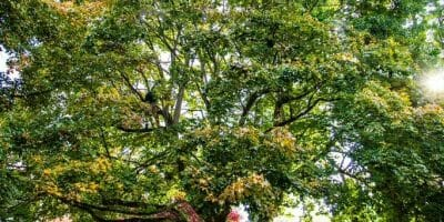 Residential Tree Care Services
