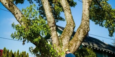 Certified Arborist doing tree work next to a home