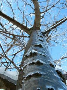 Icy Tree by OakleyOriginals, on Flickr.com