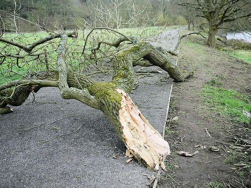 broken tree branch