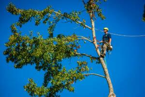 tigard oregon tree removal
