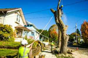 tigard or tree services company