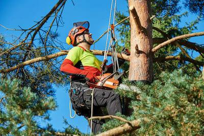 Tree Pruning Beaverton OR