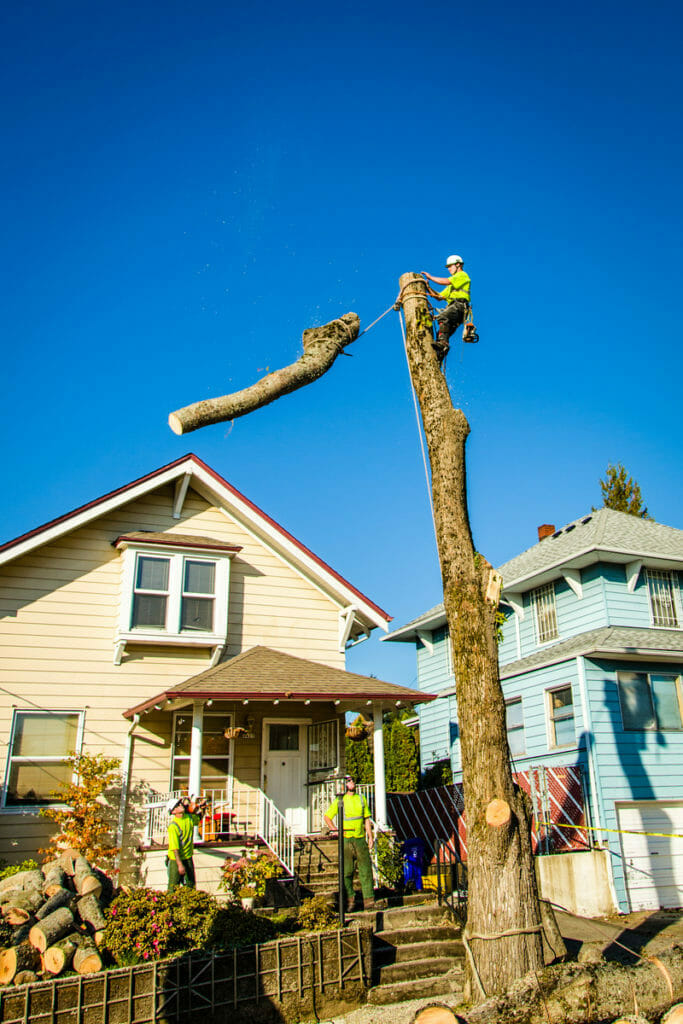 Tree Removal Costs Portland