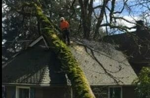 Tree removal video capture