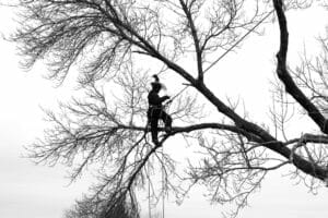 Certified arborist on the branch of a tree
