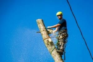 certified arborist with tree removal services in Gresham