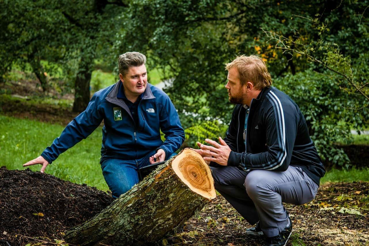 Tree Removal Consultation