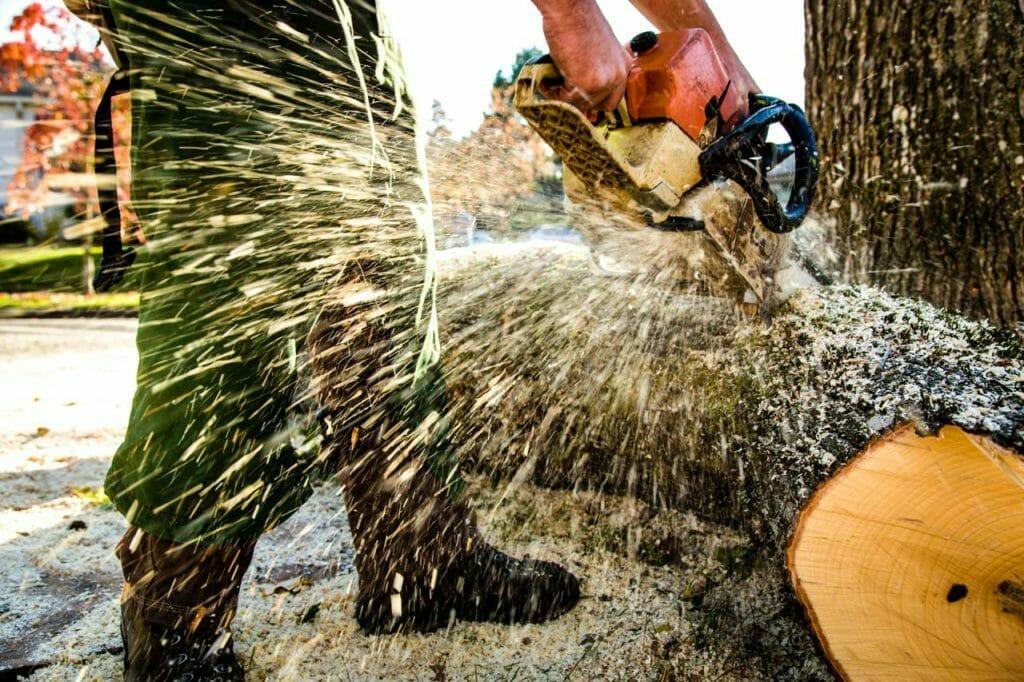 Portland tree removal services