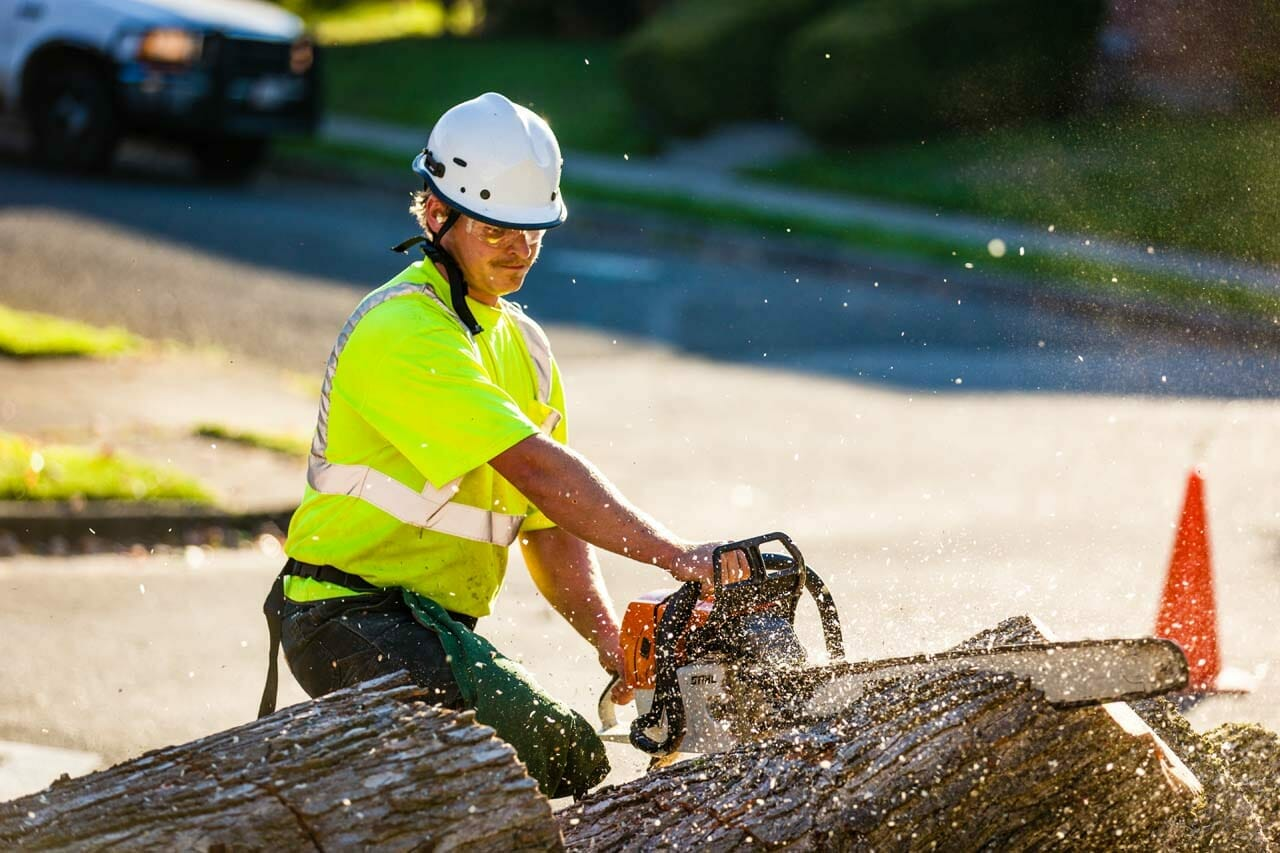 Certified Arborist Providing Tree Trimming Services