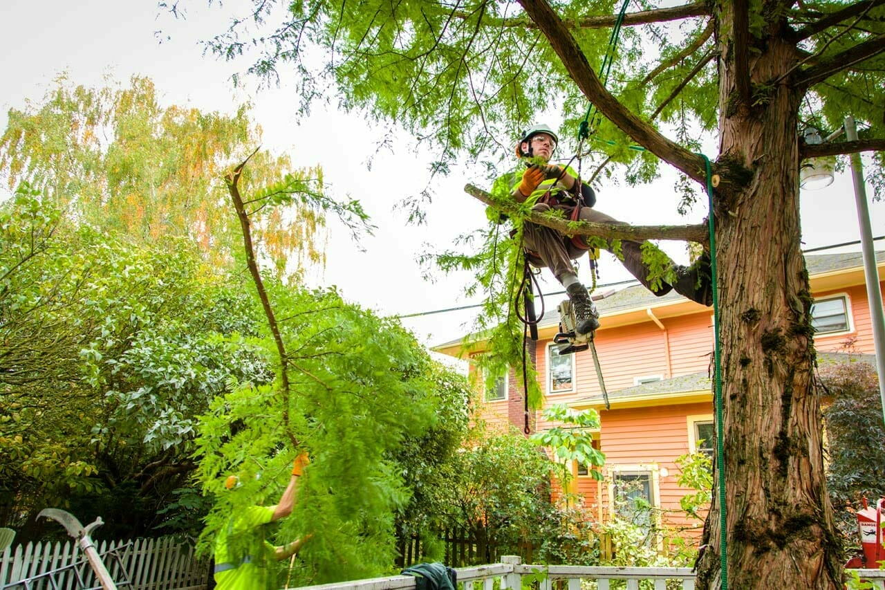 Safe Tree Cabling