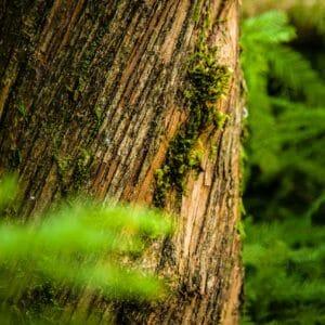Portland OR Tree Planting Service