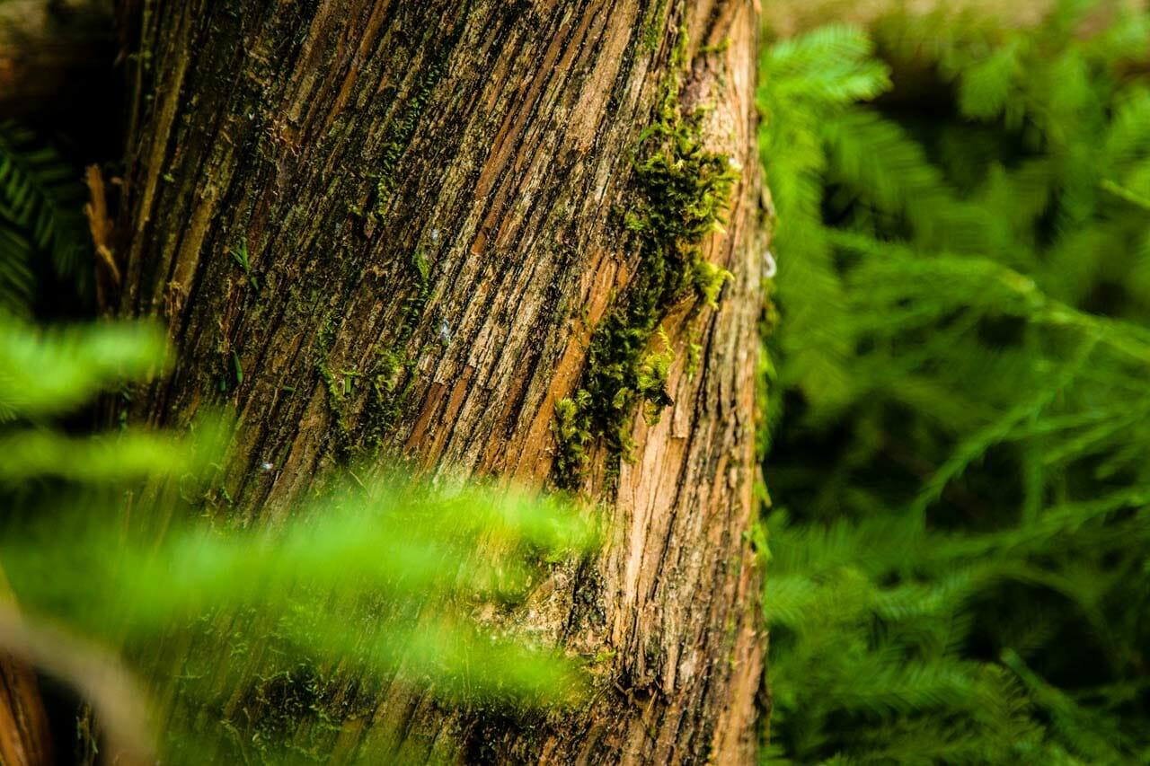 Portland Oregon Tree with Moss
