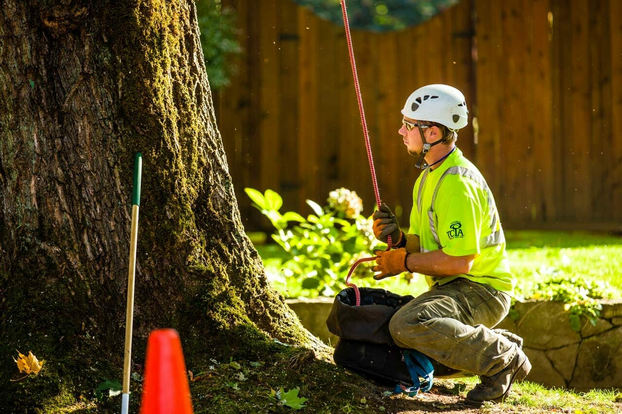 Tree Care Service from a Certified Arborist