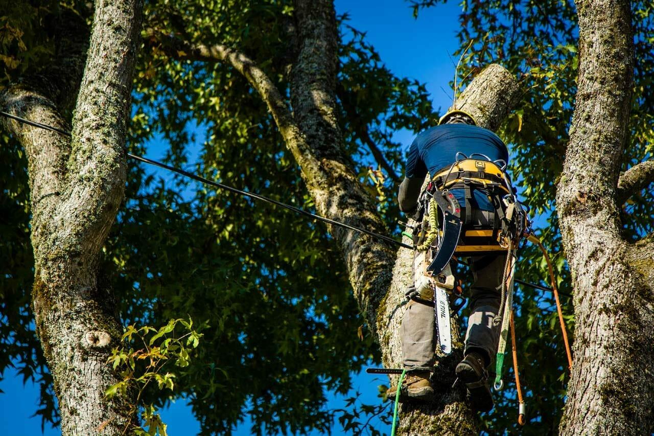 Tree Pruning in Portland Oregon