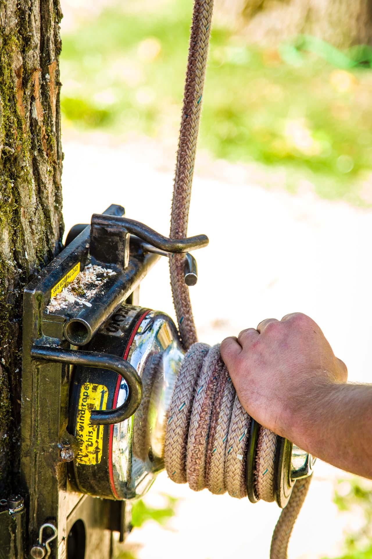 Proper Tree Cabling Equipment