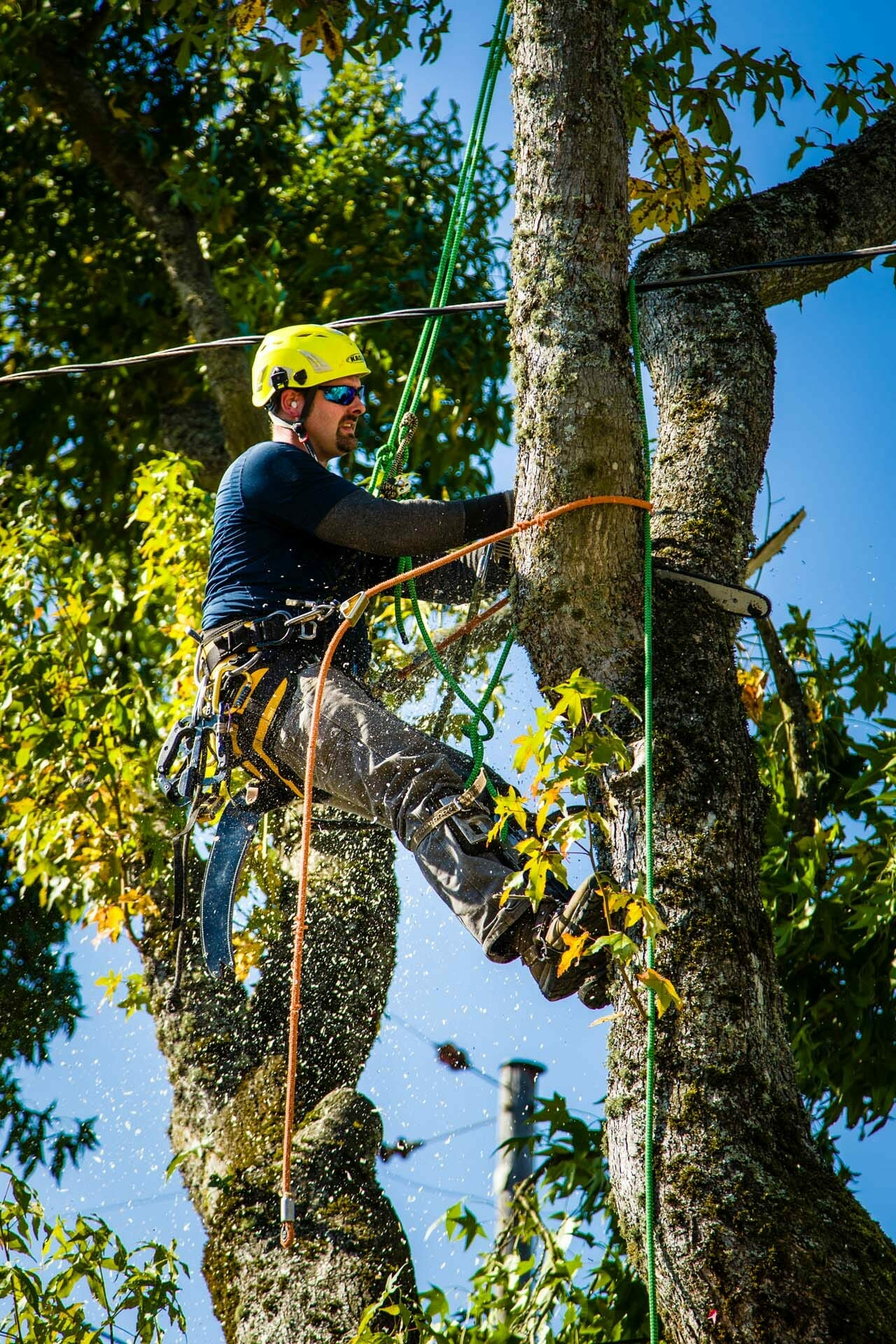Portland Tree Removal - Urban Forest Professional