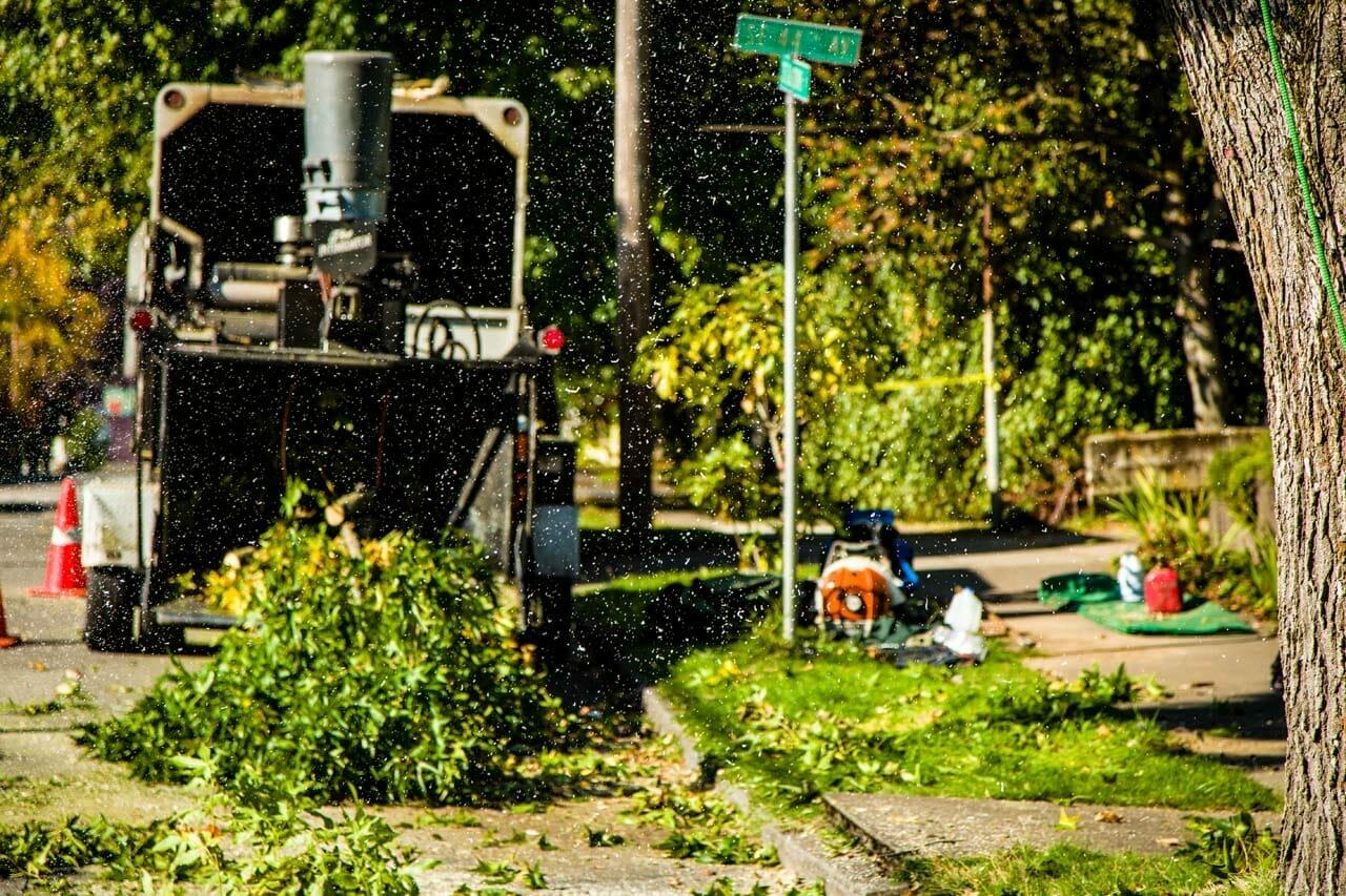 Professional Tree Care Service on Portland Street