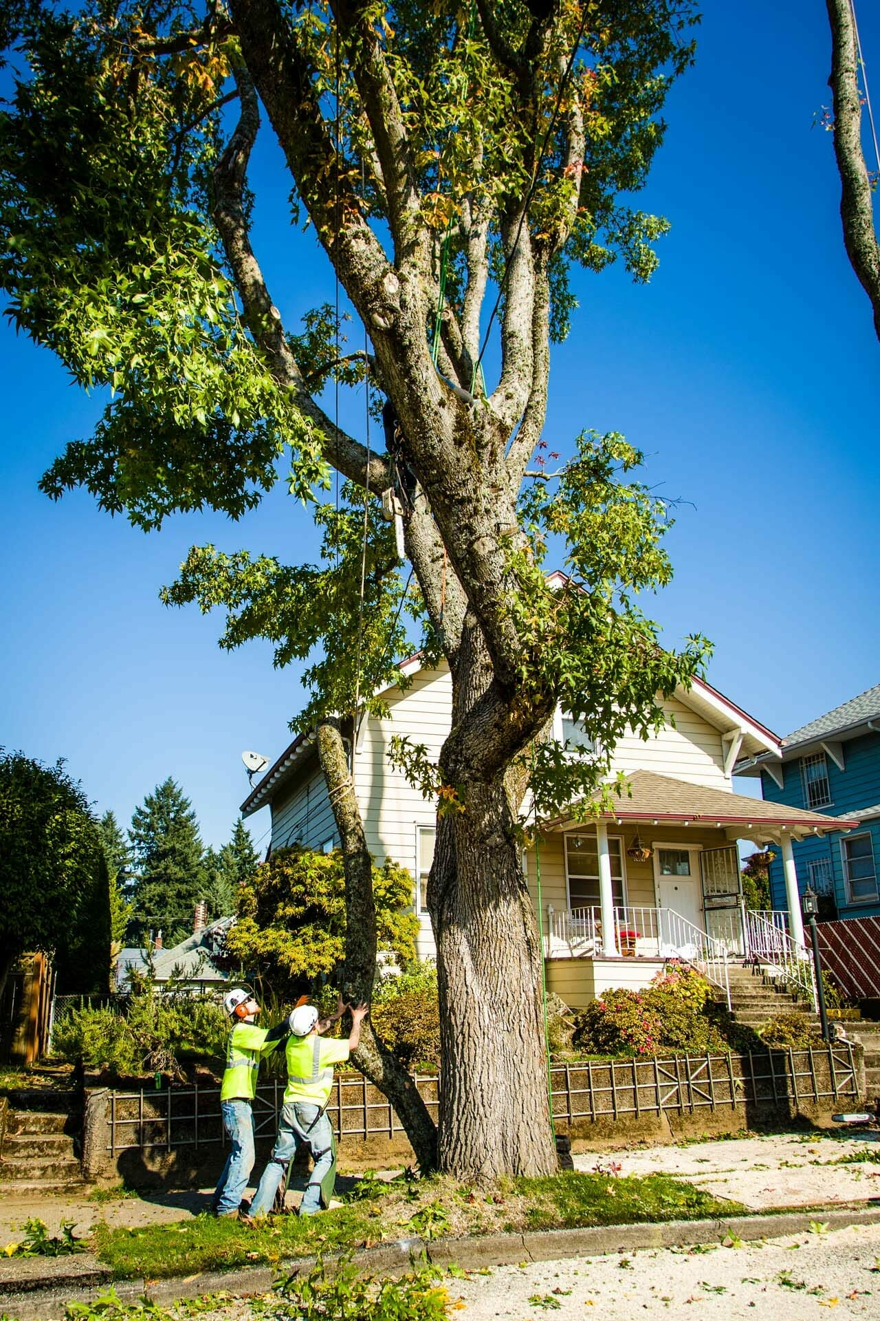 Safe and Professional Tree Pruning