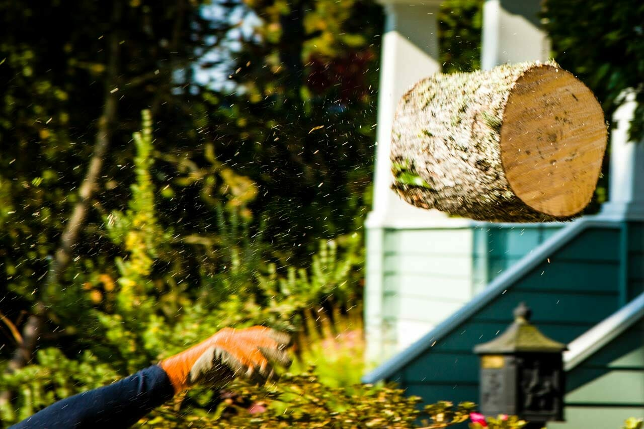 Stump Grinding on Site at Portland Home