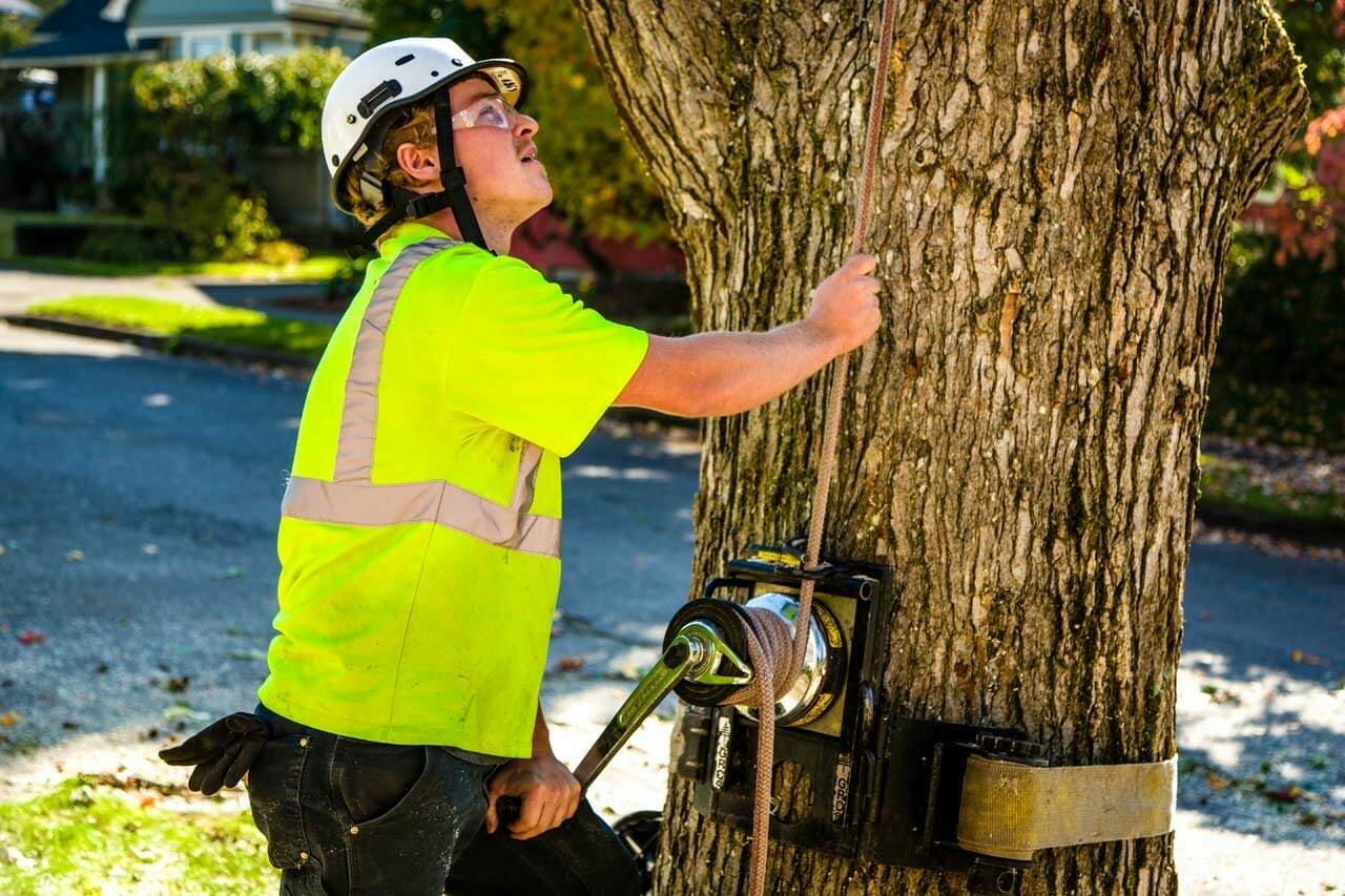 Safely Trimming Trees in Portland Oregon