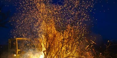 small tree on fire