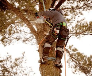 cheapest time to cut down a tree urban forest pro
