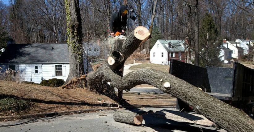 Emergency Tree removal in Portland, Tigard, Beaverton, Milwaukie, Vancouver