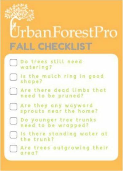 fall tree care checklist urban forest pro