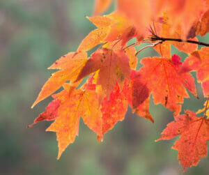 fall tree care tips urban forest pro