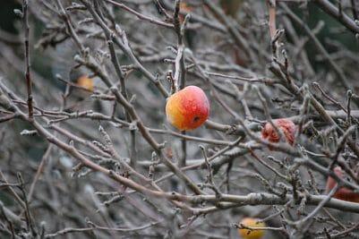 pruning fruit trees oregon