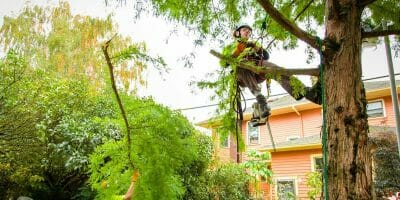 Urban Forest Pro Certified Arborist at work