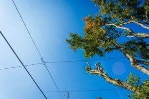 Portland trees near power lines