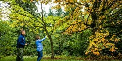 Arborist walking around with woman inspecting trees