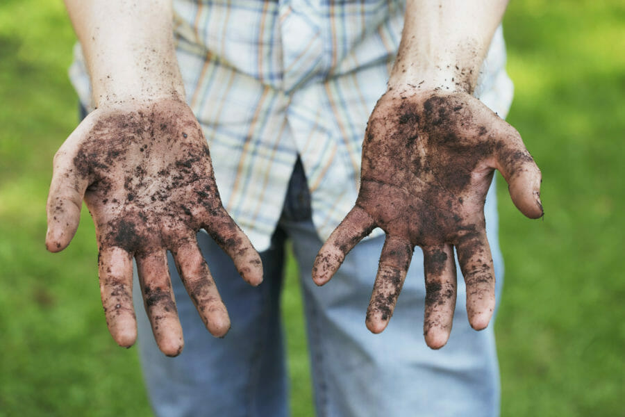 A man showing dirty hands after gardening work and plant health care check-up