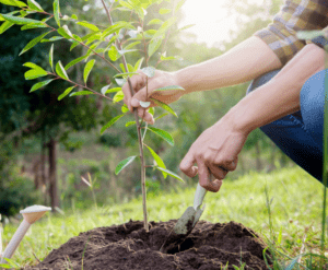 planting a tree pacific northwest urban forest pro