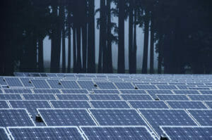 solar panels and trees in the mist