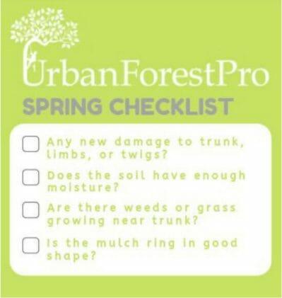 spring tree care checklist urban forest pro