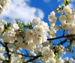 spring tree care tips urban forest pro
